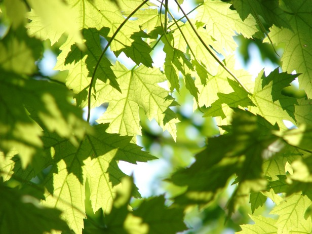 leaves-291024