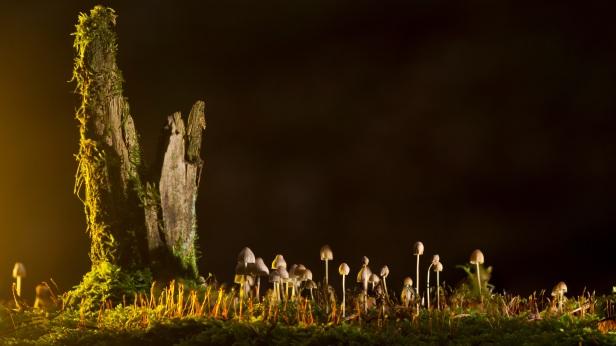 mushrooms-2212899